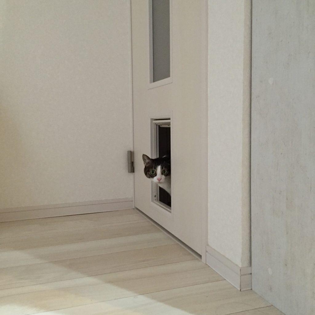 猫用出入り口