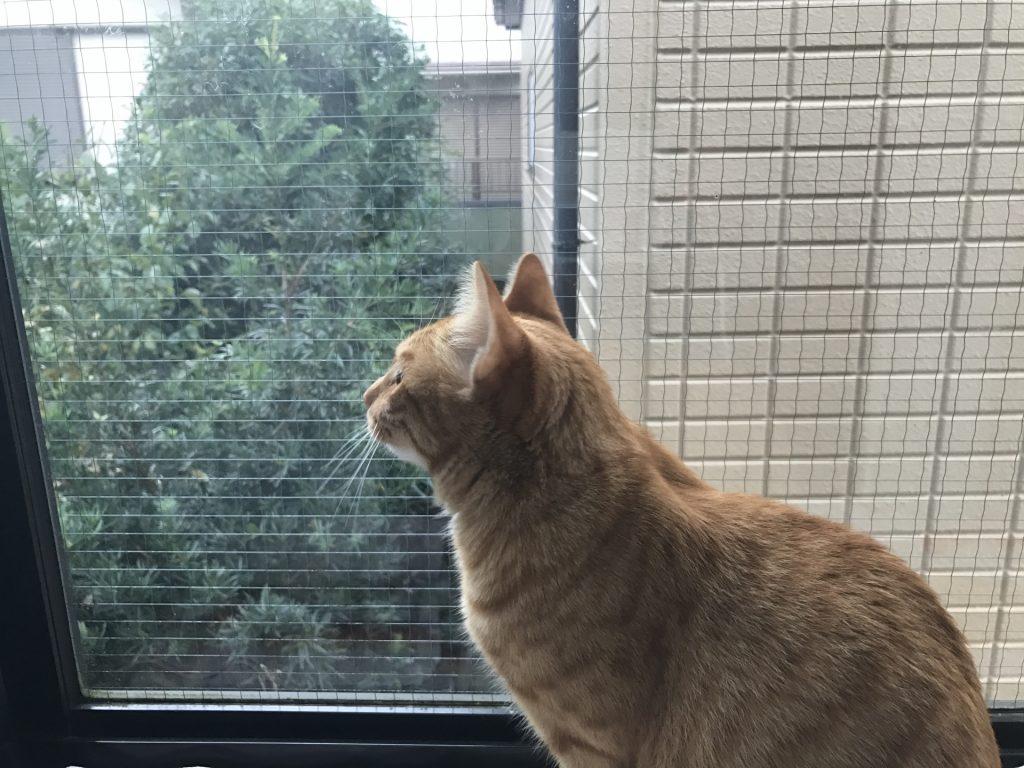 猫 景色 眺める