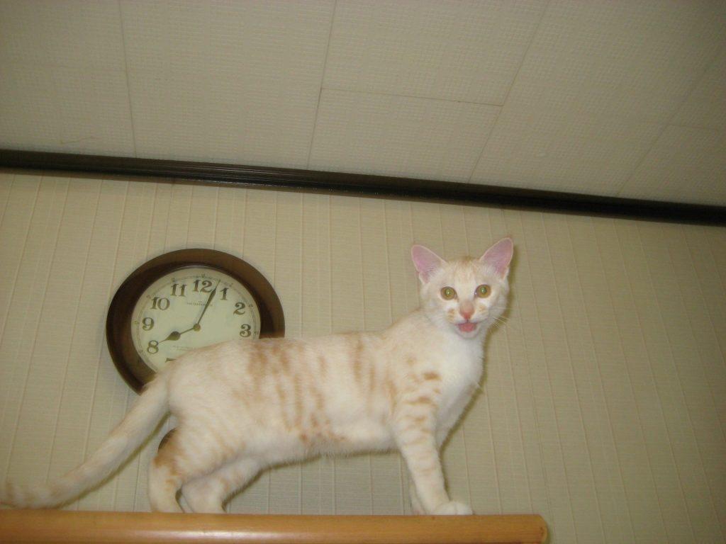 猫 高い所