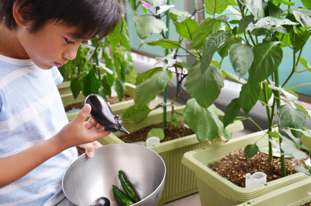 家庭菜園 子供
