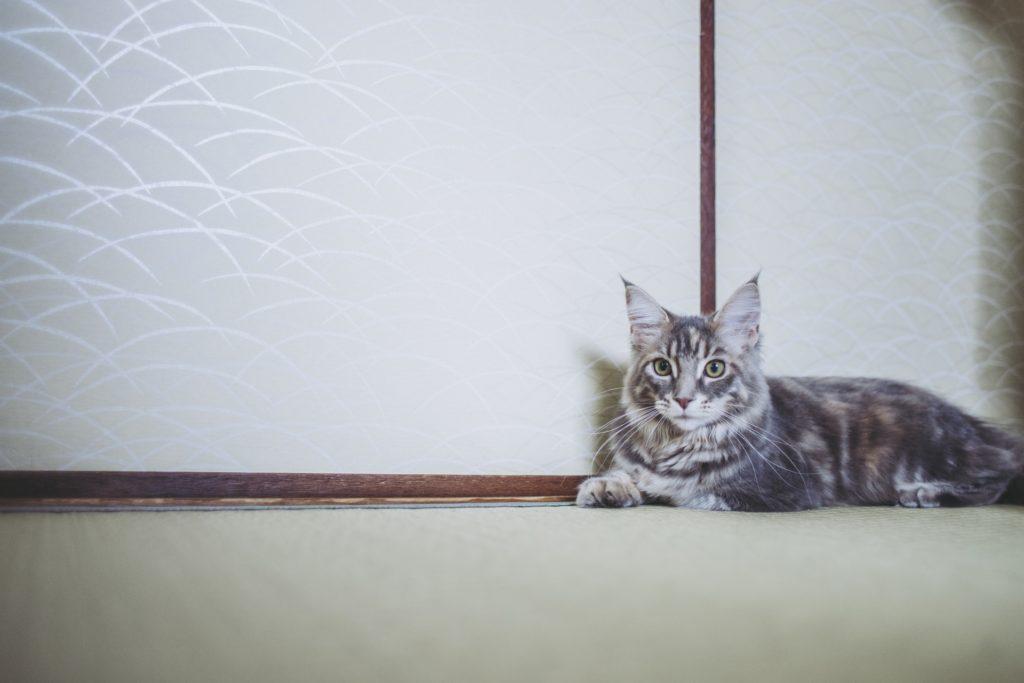 畳 猫の爪