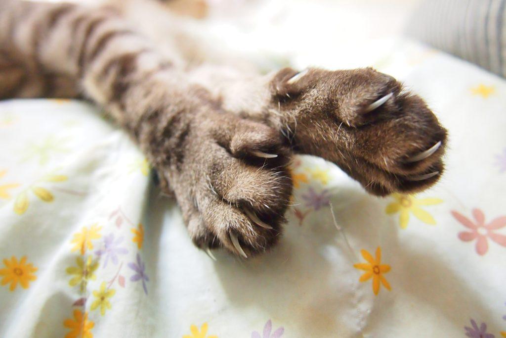 猫 引っ掻き