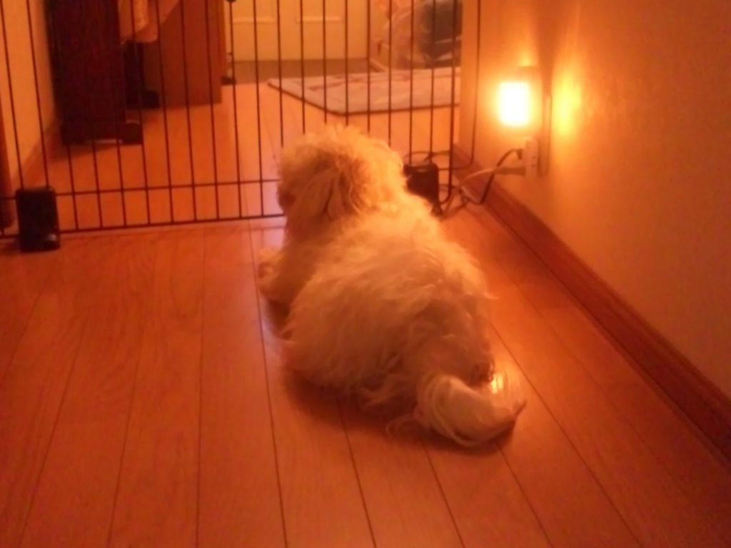 犬の逃亡防止